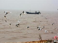生态环境部:启动渤海地区入海排污口排查整治工作